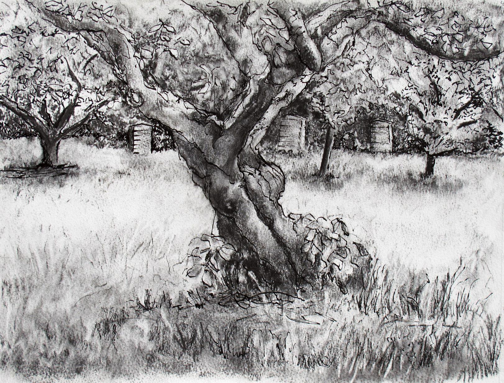 IMG_0321-ed Old Apple Tree