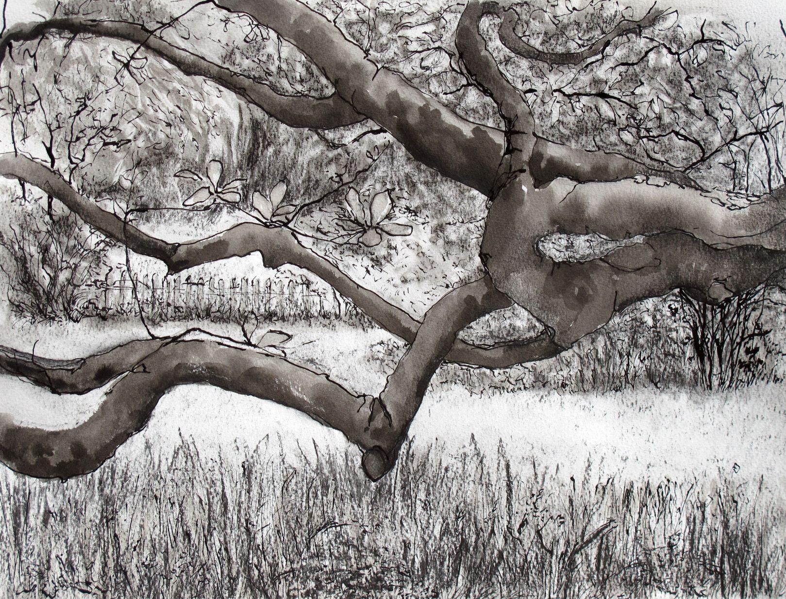 IMG_0323-ed Under the Trees